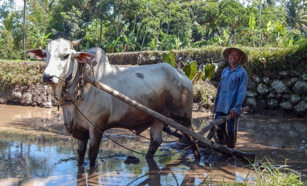 Locale bevolking, Java