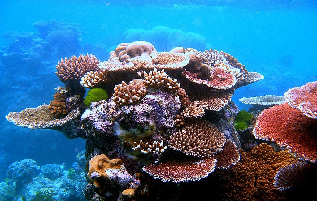 Great Barrier Reef2