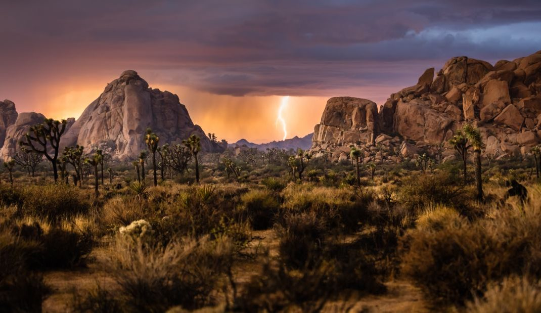 Joshua Tree National Park, California - credit: Andrew Peacock
