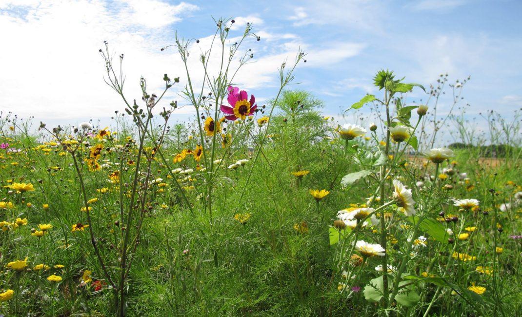 bloemendijken Zuid-Beveland