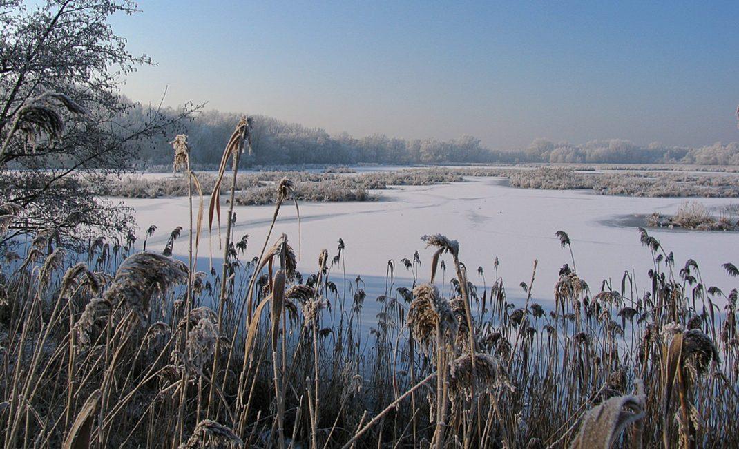 Molsbroek in de winter