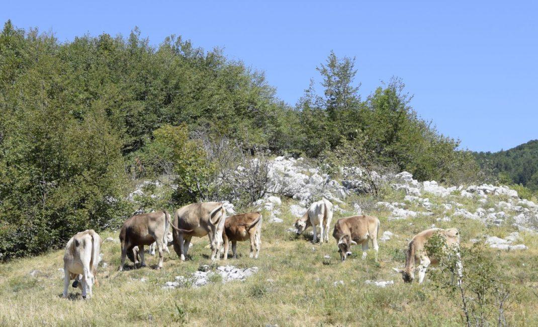 Onderweg kom je nog eens wat tegen (Vipava vallei, Slovenië).