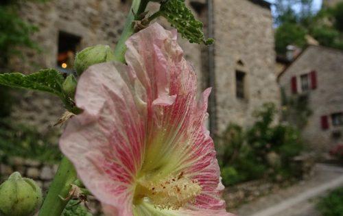 'hameaux' Castelbouc - Gorges du Tarn - Frankrijk